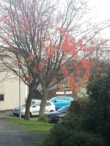 This picture shows the tree I can see from my kitchen window. Though it has lost lots of leaves I can still see l lots of different shades of red and orange.